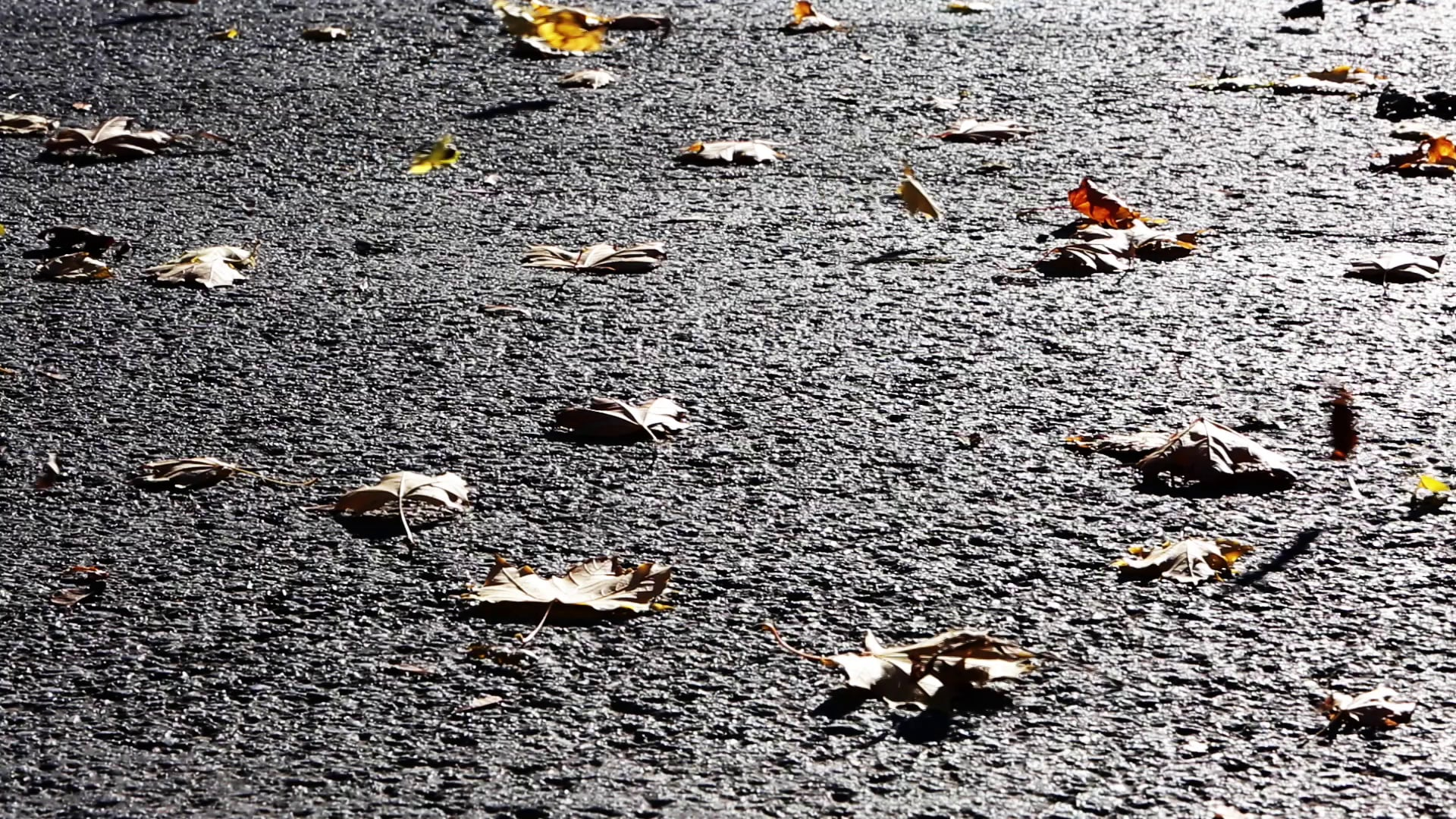 Blown Leaves on Asphalt