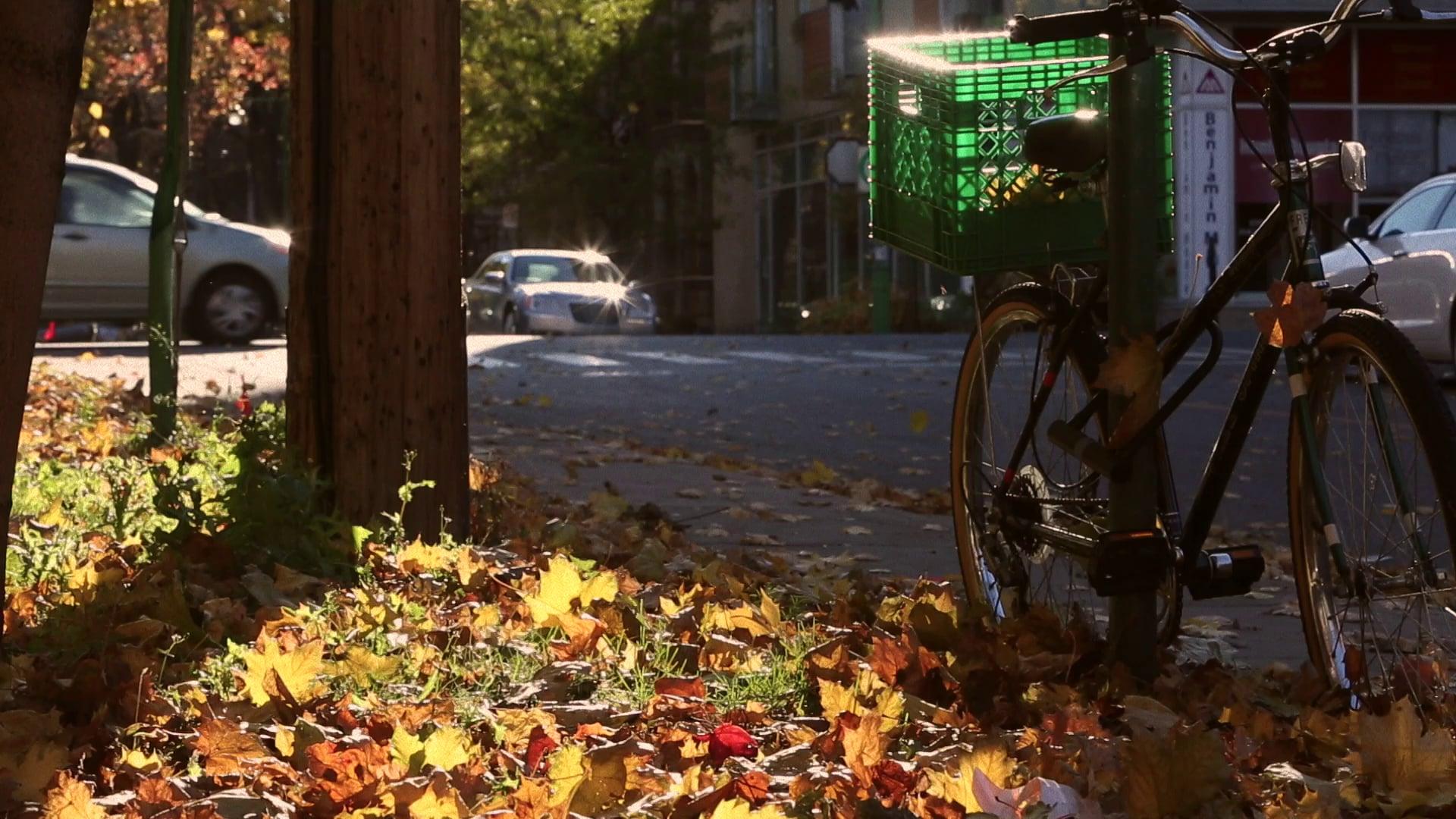 Peacefull Bike Scene with Traffic